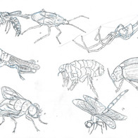 Insect Study 3