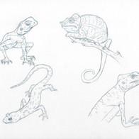 Reptile/Fish Study 1