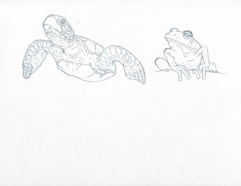 Reptile/Fish Study 2