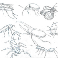Insect Study 2