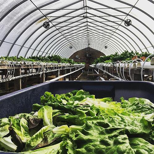 Springhill Farms Hydroponic Salad