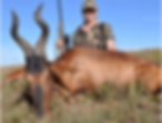 Wild Horizon video Red Hartebeest.png