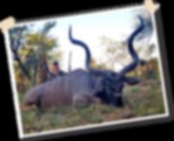 Sandy Mellon Kudu.png