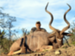 Kudu about us.png