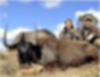 Wild Horizon video Wildebeest.png