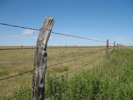Texas_barbed_wire_fence.JPG
