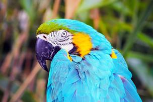Parrot optimised