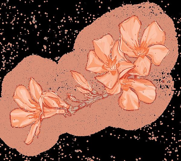 Oleander_compr.png