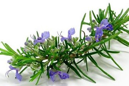 Rosemary CO2 Extract Organic 30ml