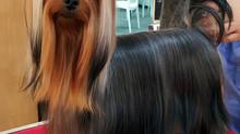 1.ª Exposição Canina Nacional do Alto Minho (Ponte de Lima- Portugal)- CAC