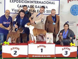 77 Exposición Nacional Canina CAC- (IFEVI-Vigo)
