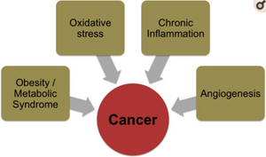 chronic inflammation and oxidative stress cause cancer