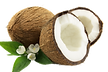 Coconut-Cut-PNG-02.png