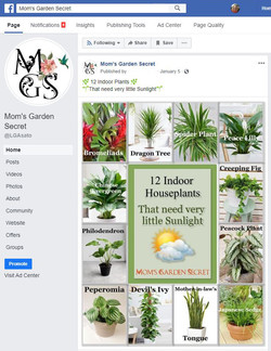 MSG - Facebook Marketing