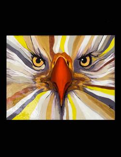 """""""EAGLE EYES"""""""