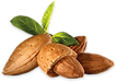 almond_PNG32.png