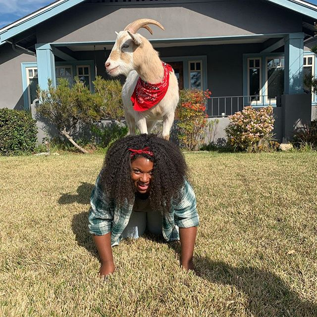 Just practicing my #goatyoga