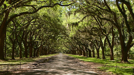 125972-Savannah.jpg