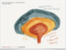 O cérebro límbico e sua relação com o processo decisório