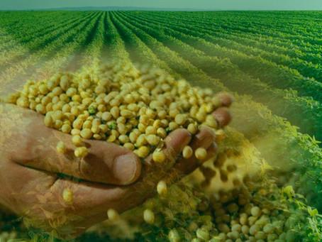 Semente vigorosa e sadia faz a base do sucesso da lavoura