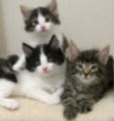 MJ4 trio agai 140919.jpg