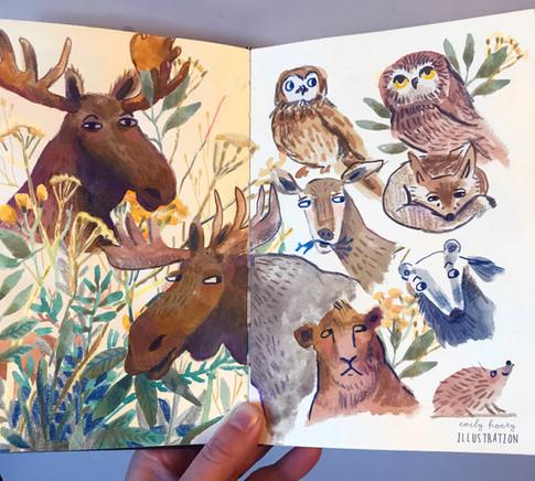Sketchbook moose