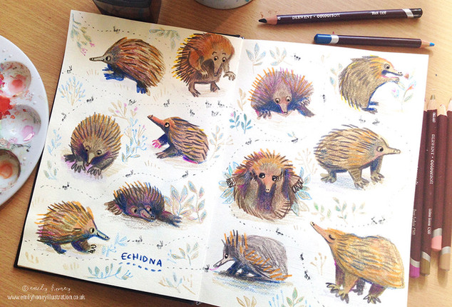 Echidna sketchbook pages