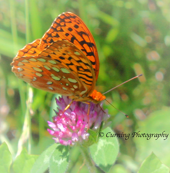 photograph of a orange butterfly on a pink flower
