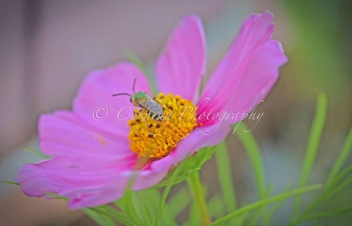 bee on a flower #3