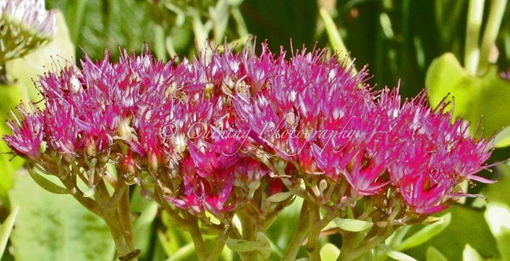 pink flower #2