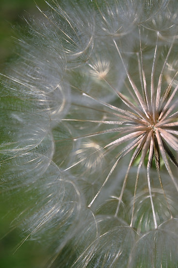 close up Photograph of seed stalks of a plant