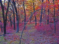 fall landscape #2