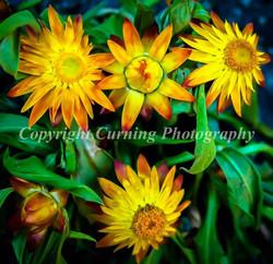 yellow an orange flowers