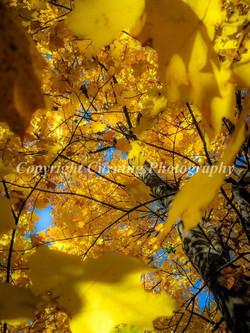 fall tree close up