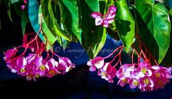 hanging pink flower
