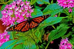 butterfly on a flower #2