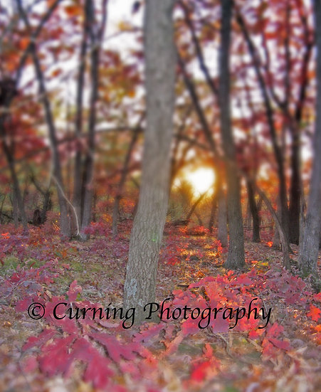 Photograph of red fall leaves on the ground of a forest at sunset