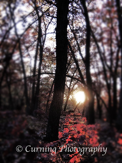 Photograph of a path of red leaves in the woods lit by the sunset in the background