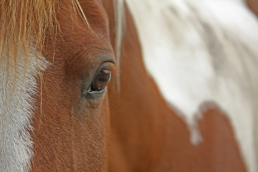 brown and white horse close up photograph