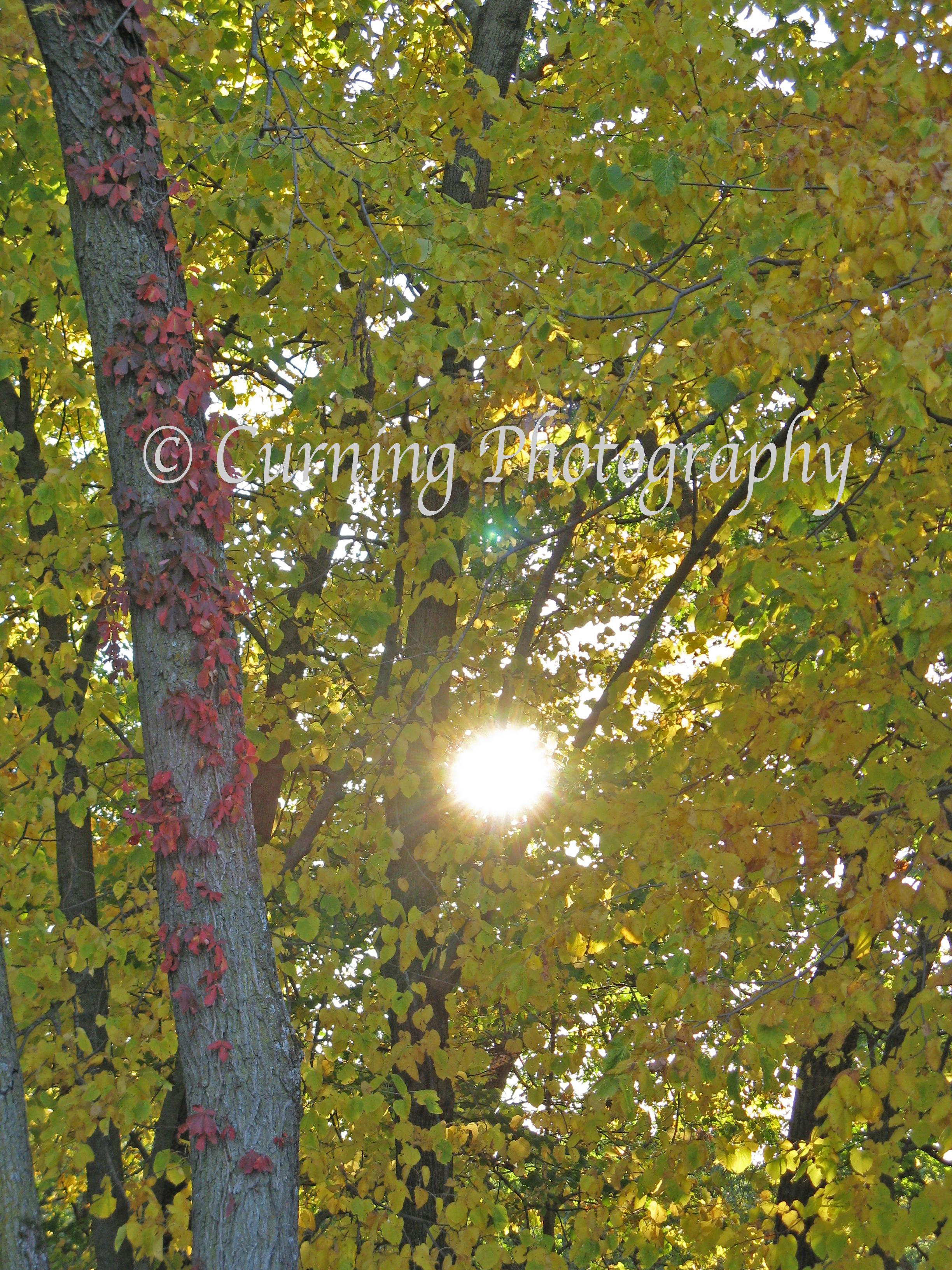 fall sunset #4