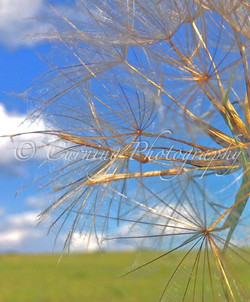prairie plant close up