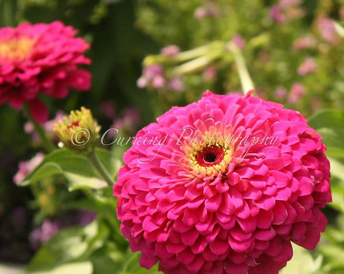 Nature photography united states curning photography pink and pink and yellow flowers mightylinksfo Image collections