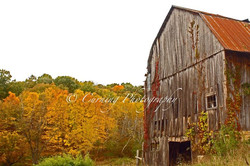 barn in fall #3