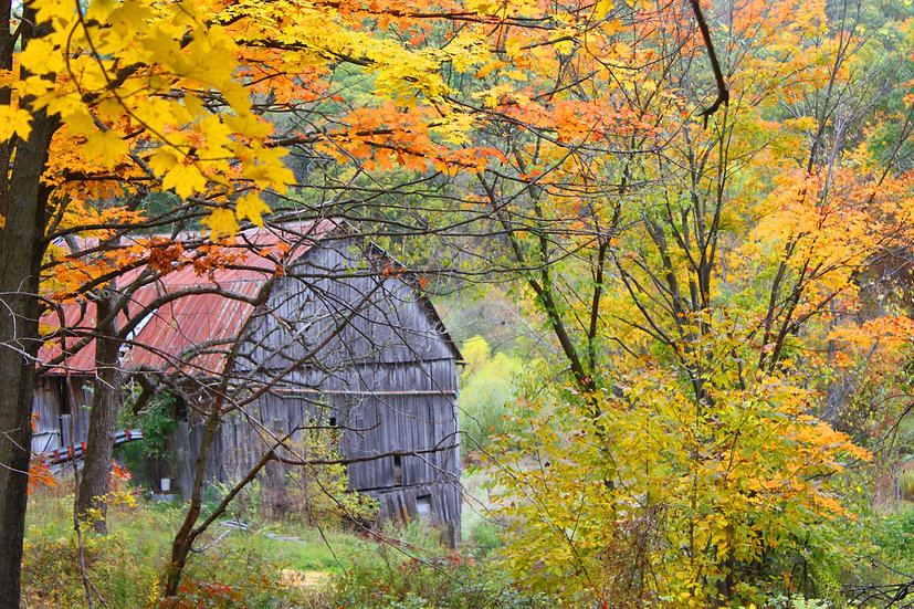 photograph of a old barn in the woods during fall