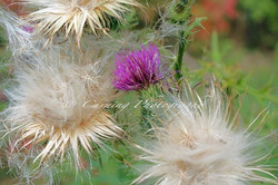purple and white wild flowers