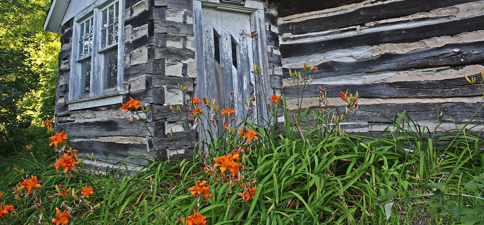 photograph of orange lilies in front of a log cabin