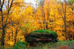 fall landscape #4