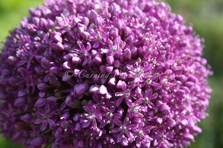 purple flower #5