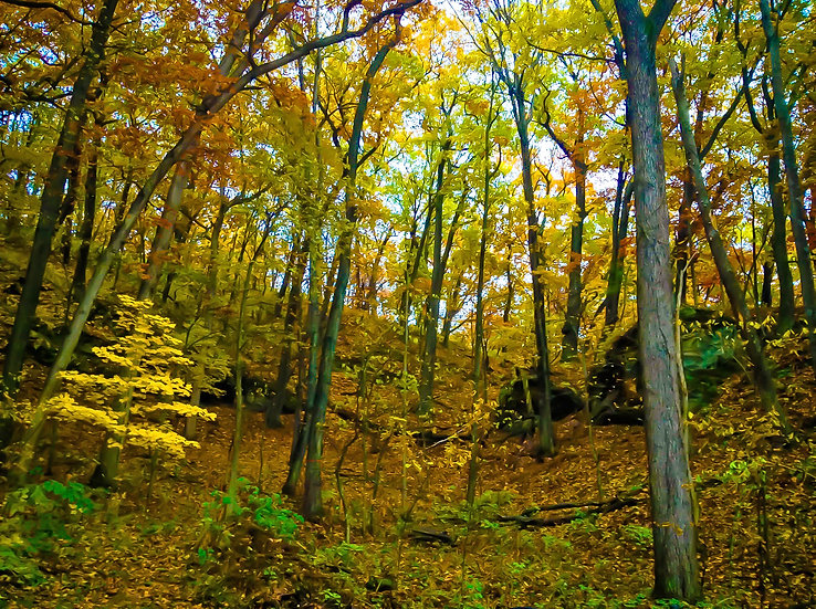 landscape photograph of a forest in fall