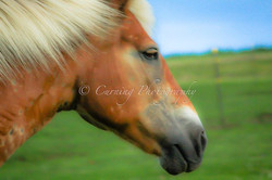 dreamy horse